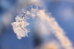 草树冰词根 库存照片