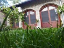 草树在庭院里 库存图片