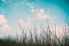 草植物和天空背景绿色  库存图片
