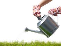 草浇灌 免版税图库摄影