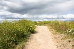 草浓厚路沙子 图库摄影