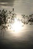 草湖种植水 免版税库存照片