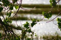 草湖种植水 库存照片