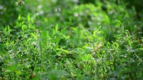 绿草湿从雨 股票视频