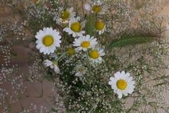 草特写镜头花束的白色春黄菊麦耳朵 免版税库存照片
