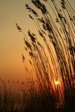 草现出了轮廓日落 库存照片