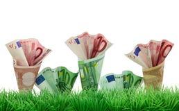 草生长货币 图库摄影