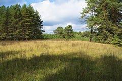 草甸、树和天空在令人愉快的光 _3 库存照片