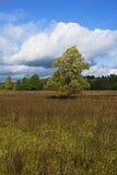草甸、树和天空在令人愉快的光 _6 免版税库存照片