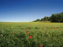 草甸、树和蓝天 库存照片