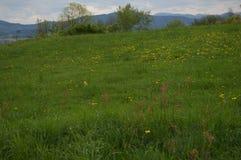 草甸、蒲公英和山在背景中 免版税库存图片