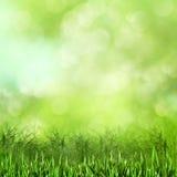 草甸。 库存图片