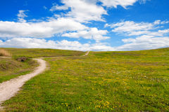 草甸之间的道路有雏菊的 免版税库存照片