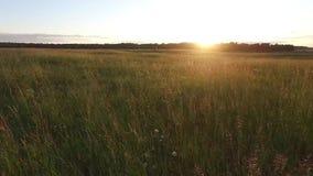 草甸低看法  影视素材