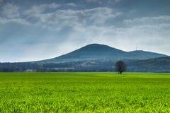 草甸和一棵树在沙皇Asen,保加利亚附近 免版税图库摄影