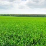 草甸和天空 库存图片