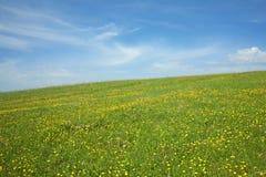 草甸和小山用许多黄色蒲公英和天空 免版税库存照片