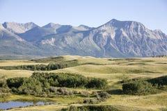 草甸和山景 免版税库存照片