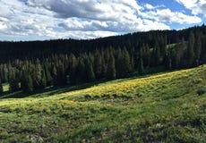 草甸和开花在黄石国立公园 库存图片