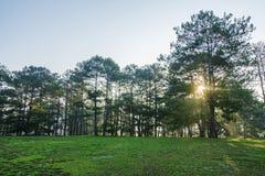 草甸和杉木森林和太阳 库存照片