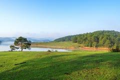 草甸和杉木森林 免版税库存图片