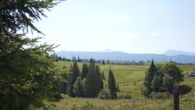 草甸和森林在山中间 影视素材