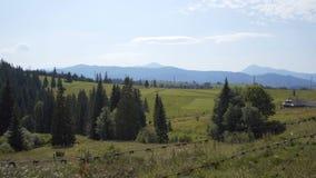 草甸和森林在山中间 股票视频