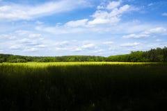 草甸和森林 免版税库存图片