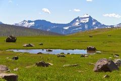 草甸和池塘在冰川国家公园 免版税库存图片