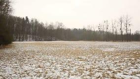 草甸和沼泽地用雪盖的洪泛区森林在冬天, Poodri风景,保护了风景区域,非常 股票录像
