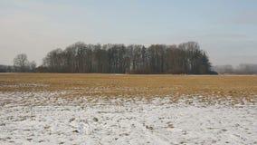 草甸和沼泽地用雪盖的洪泛区森林在冬天, Poodri风景,保护了风景区域,非常 股票视频