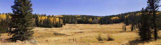 草甸和秋天颜色森林叶子亚利桑那 免版税库存照片