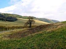 草甸和谷在山2 免版税库存图片