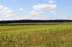 草甸和领域在Lueneburg荒地LÃ ¼ neburger Heide 免版税库存照片