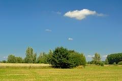 草甸和麦田与树在清楚的蓝天下在Kalkense Meersen自然保护,富兰德,比利时 免版税库存照片