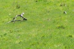 草甸和死的木头 免版税库存图片