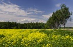 草甸在俄罗斯 库存照片