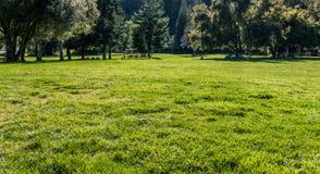 草甸在公园 库存照片