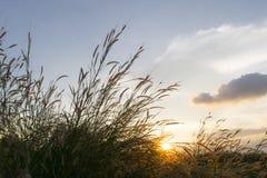 草甸在冬天开花草有天空日落背景 免版税库存图片