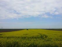 草甸在北部塞尔维亚 免版税库存照片