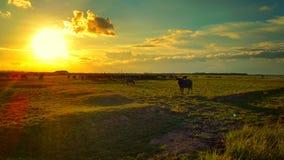 草甸在南泰国 免版税库存照片