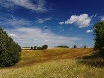 草甸在夏天 库存图片