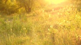 草甸在夏天 影视素材