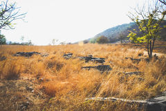 草甸在夏天 免版税库存照片