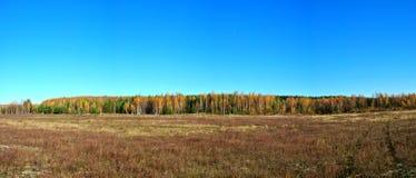 水草甸在早期的春天 免版税库存照片