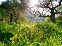 草甸在春天,地拉纳,阿尔巴尼亚 图库摄影
