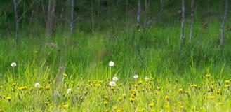 草甸在春天 库存图片
