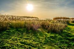 草甸在有太阳的春天在背景中 库存照片