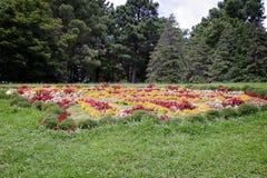 草甸在树木园,装饰用美丽的花 免版税库存照片