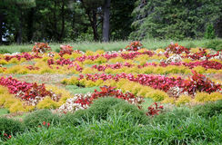 草甸在树木园,装饰用美丽的花 图库摄影